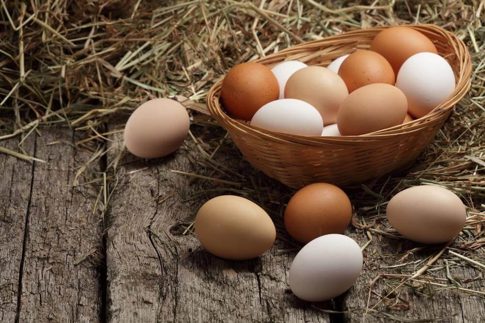 Yumurtanın Mikroplarla Bitmeyen Mücadelesi 2