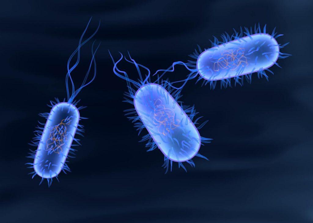 Ulusal Salmonella Kontrol Programı Hakkında …